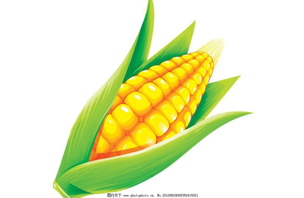 手绘玉米图片