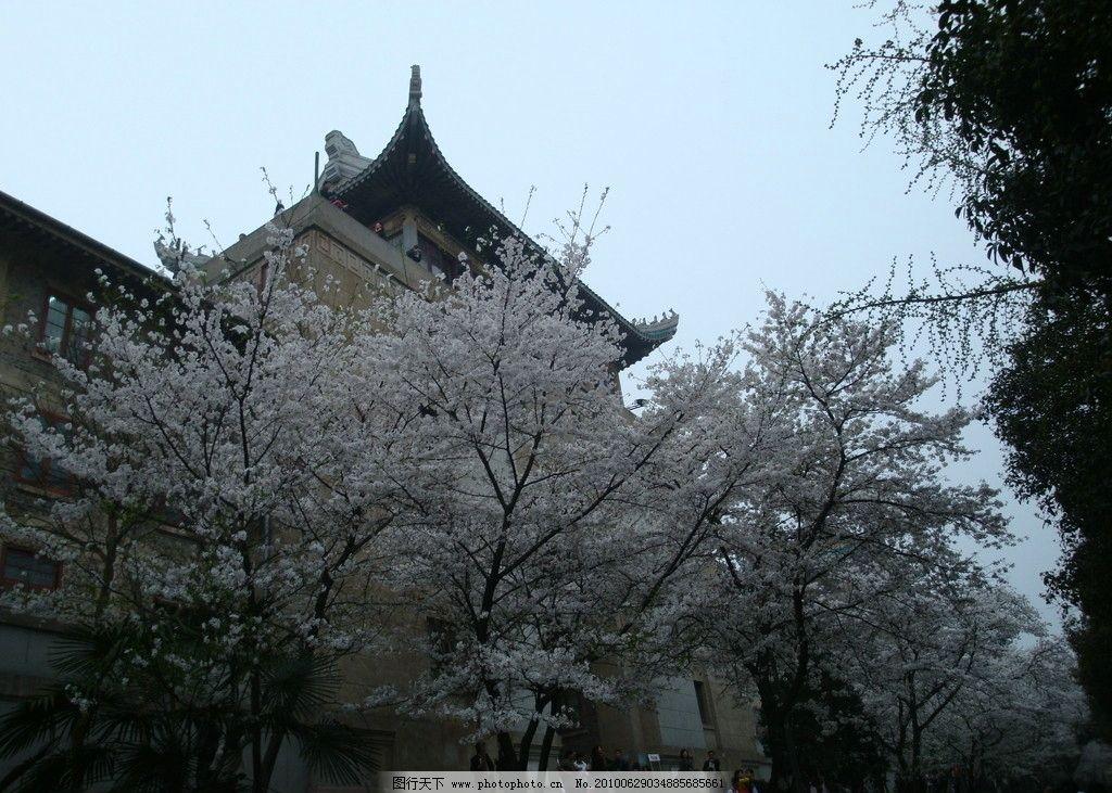 武大樱花 武汉大学 建筑 房顶 自然风景 自然景观 摄影