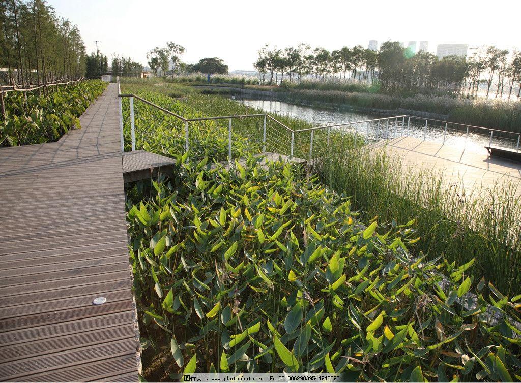 人工湿地景观 人工 湿地 后滩公园 园林建筑 建筑园林 摄影 300dpi图片